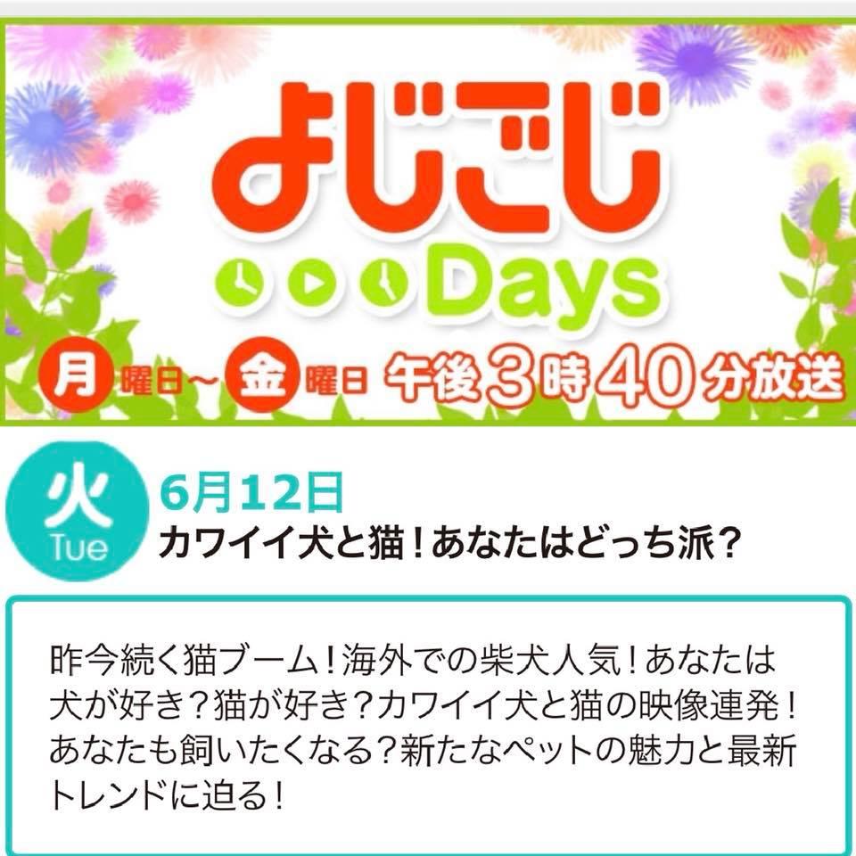速報! 本日12日 テレビ東京 よじごじDaysで「osoroi」ご紹介